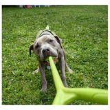 Ultimate Tug Toy - Green with Dog