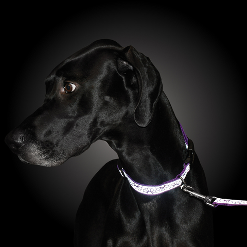 Lazer Brite Reflective Dog Collar