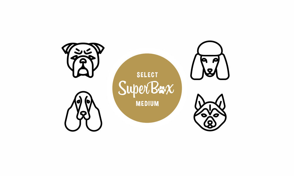 Subscribe to SuperBox Size Medium