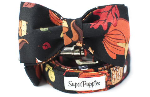 Dog-Collar-Leash