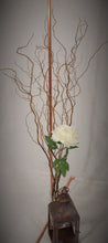 Fresh cut Curly Willow Branches 4 feet tall
