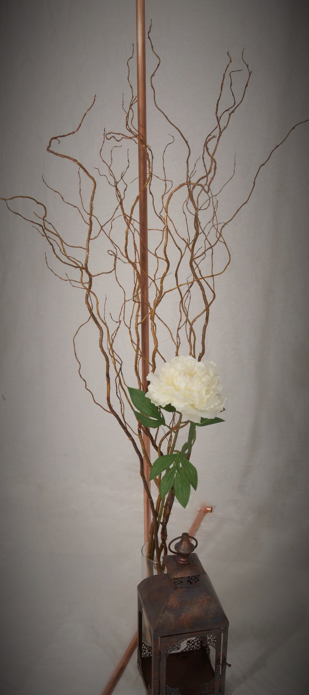 Fresh cut Curly Willow Branches 3 feet tall