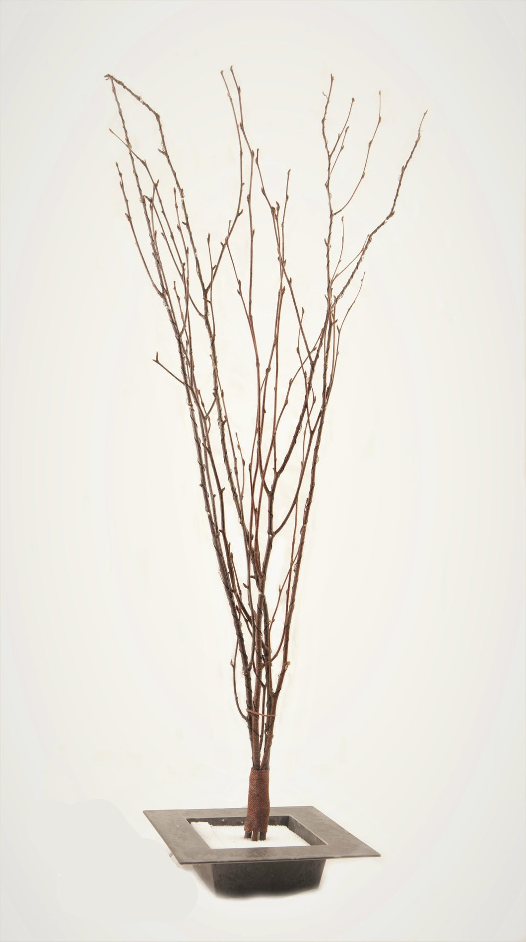 "*60"" LED Lighted Birch Branches 110v plug in"