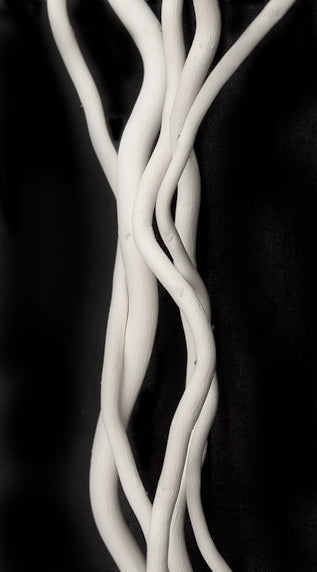 Pearl white Curly Willow Branches