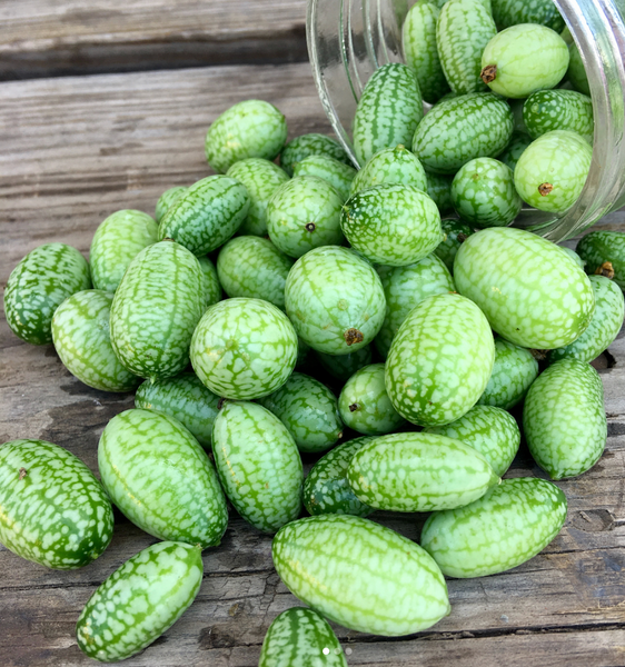 A bundle of cucamelons fresh picked from a biodynamic farm at One Gun Ranch.