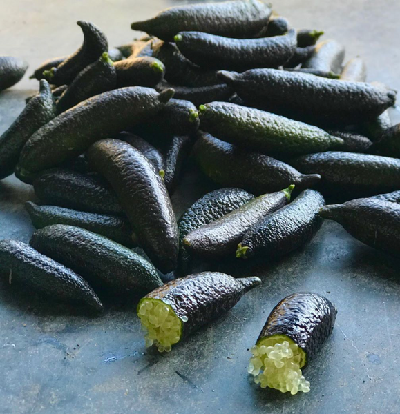 A bunch of finger limes picked from a biodynamic farm at One Gun Ranch.