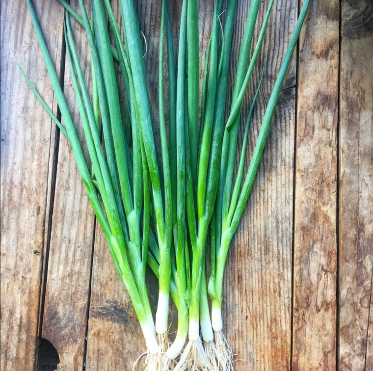 Bunching Onions - bunch