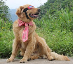 Large Dogs Fashion Strip Neck-ties - 1 Pcs