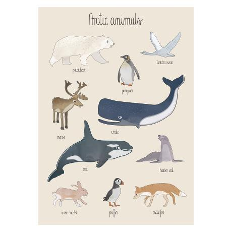 Sebra Arctic Animals Poster