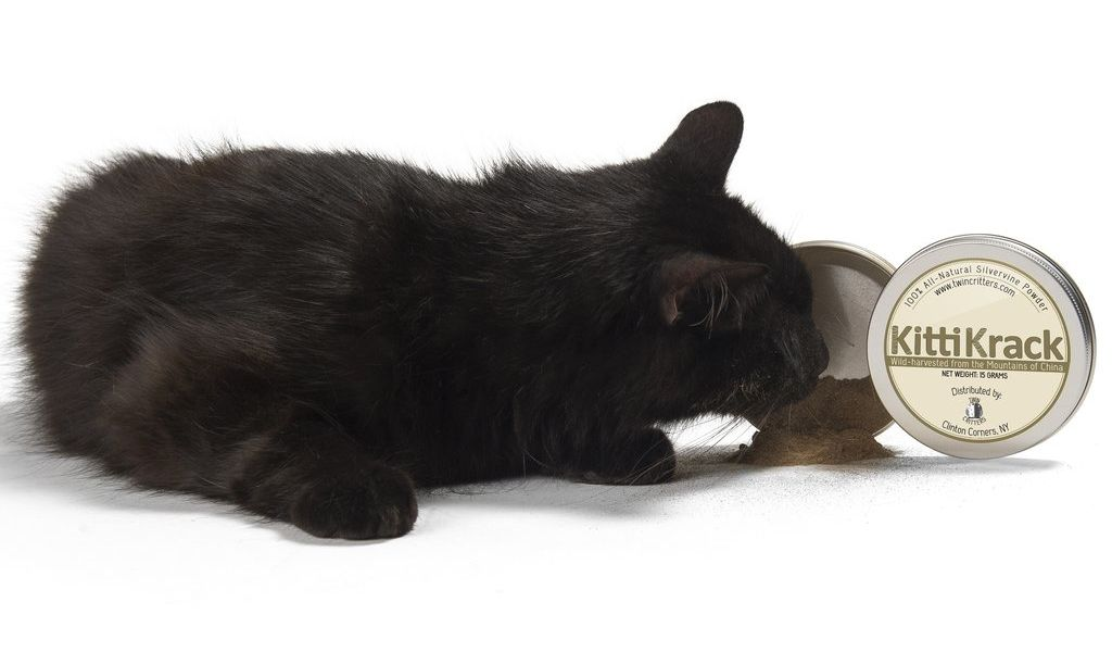 The Science Behind Silvervine: An All-Natural Catnip Alternative That More Cats Adore