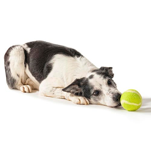 TennisWool – Large Wool Ball For Dogs