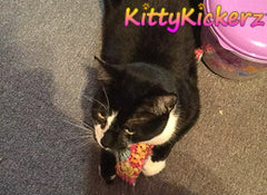 Kitty Kickerz - Kicker Stick Cat Toy with Organic Catnip