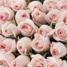 Load image into Gallery viewer,  Mudgee florist Mudgee Monkey is a local based florist in the Mudgee Area. Pictured is a generous bouquet of pastel pink roses. Valentines day Free delivery and mothers day