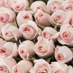 Mudgee florist Mudgee Monkey is a local based florist in the Mudgee Area. Pictured is a generous bouquet of pastel pink roses. Valentines day Free delivery and mothers day