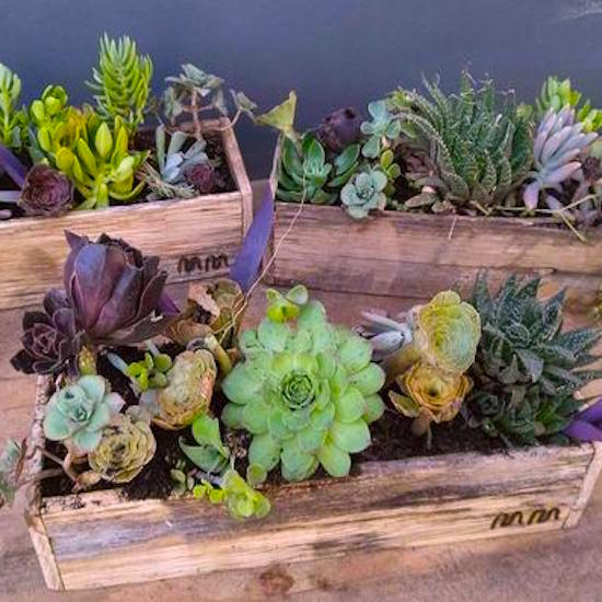 succulent garden delivered in the mudgee region. Mothers day flowers delivered