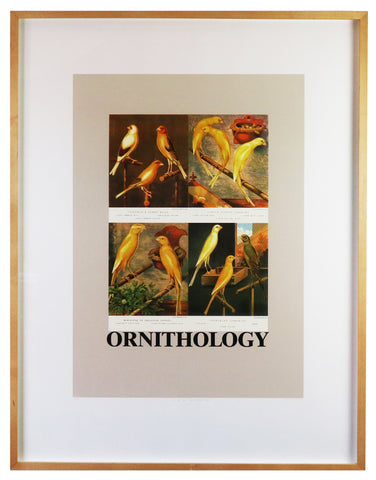 Peter Blake - O is for Ornithology (Framed)