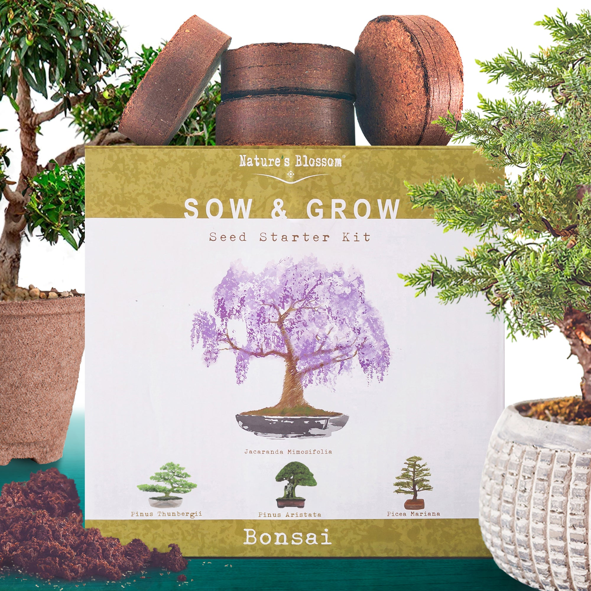 Nature S Blossom Bonsai Tree Seed Starter Kit Grow 4 Trees From Seed
