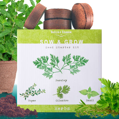Herb Garden Kit - 5 Culinary Herbal Plants to Grow From Seed