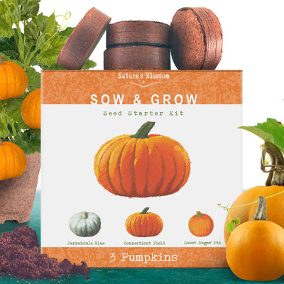 Pumpkin Starter Kit - Grow 3 Types of Pumpkins & Squash