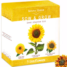 Sunflower Grow Kit - 3 Types of sunflower to grow from seed