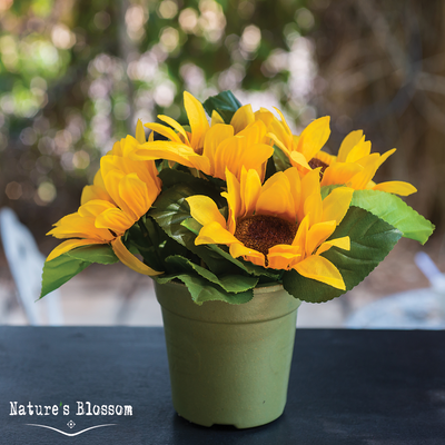 Sunflowers Growing Kit - 3 Types of sunflowers to grow from seed
