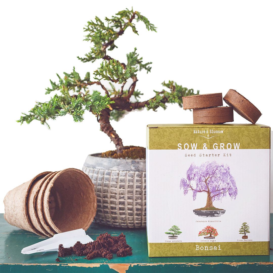 Bonsai Tree Garden Kit - 4 Miniature Trees to Grow From Seed