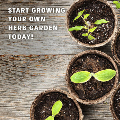 Herb Garden Kit - 4 Culinary Herbal Plants to Grow From Seed