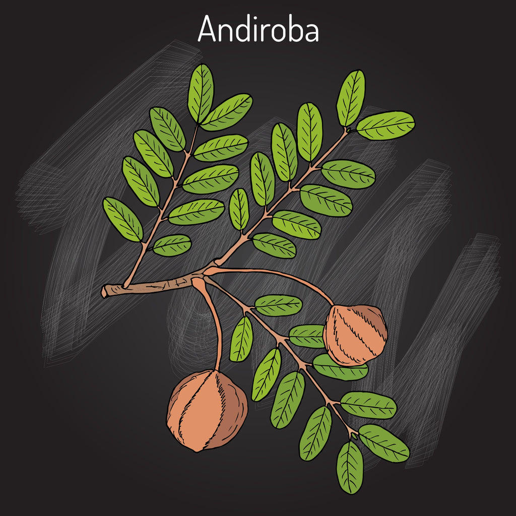 Andiroba Oil, Virgin