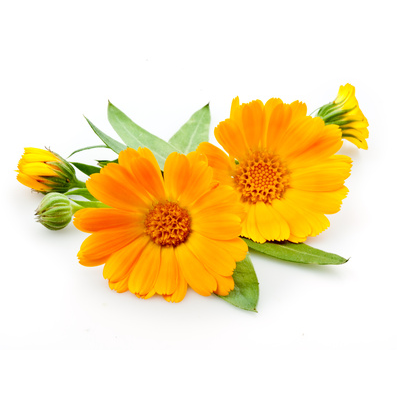 Calendula in Coconut Oil