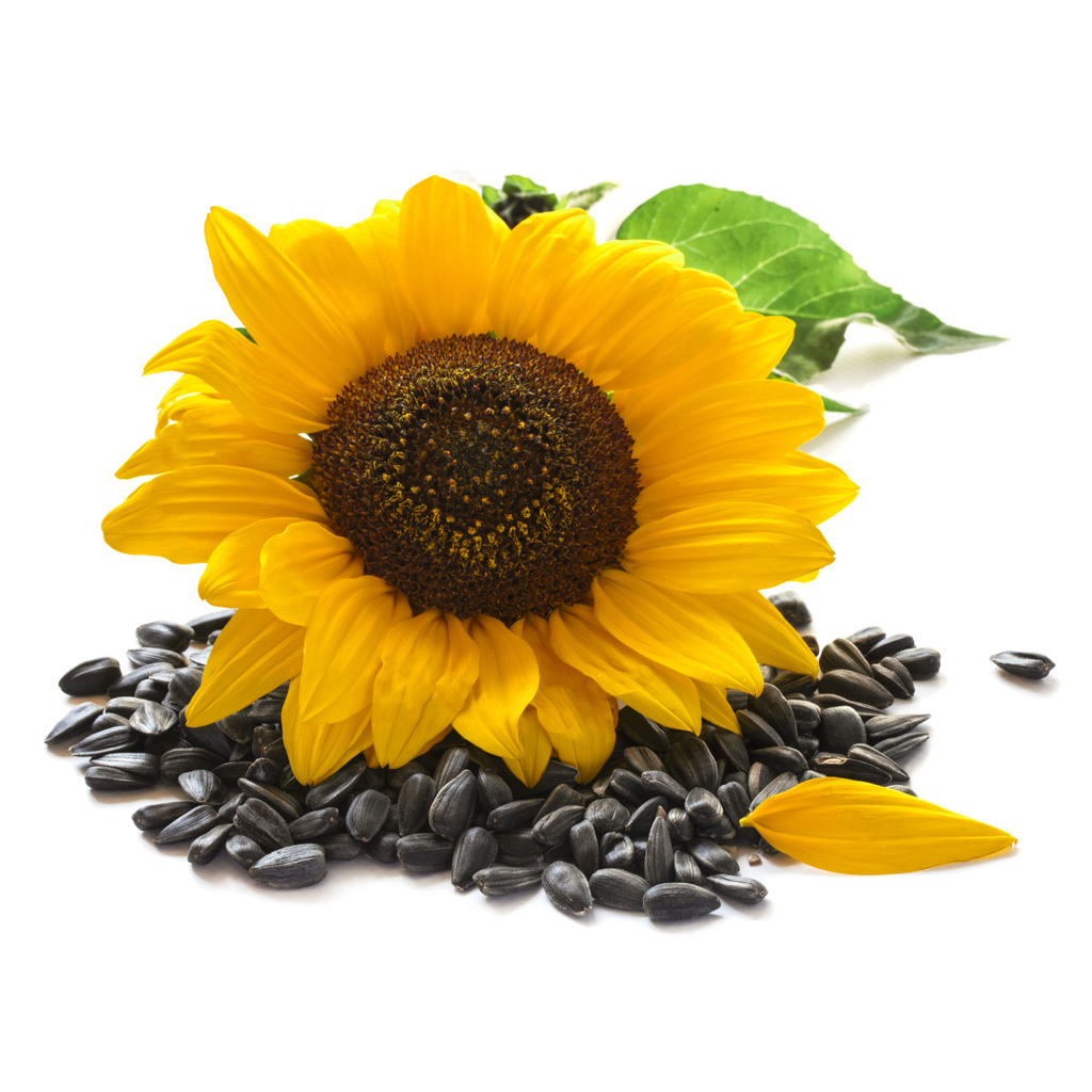 Sunflower Oil, High Oleic, Certified Organic