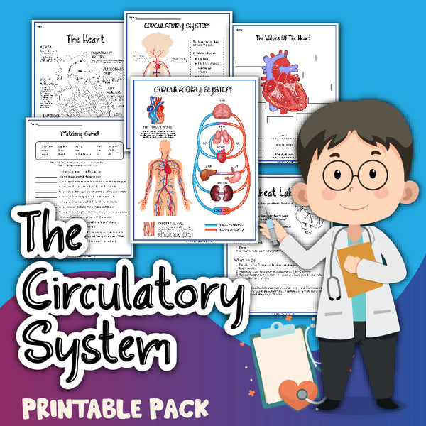 Circulatory System Activity Set