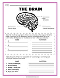 Nervous System Activity Set