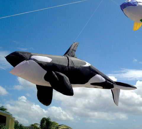 Killer Whale 8 Foot Kite Line Laundry - Kitty Hawk Kites Online Store