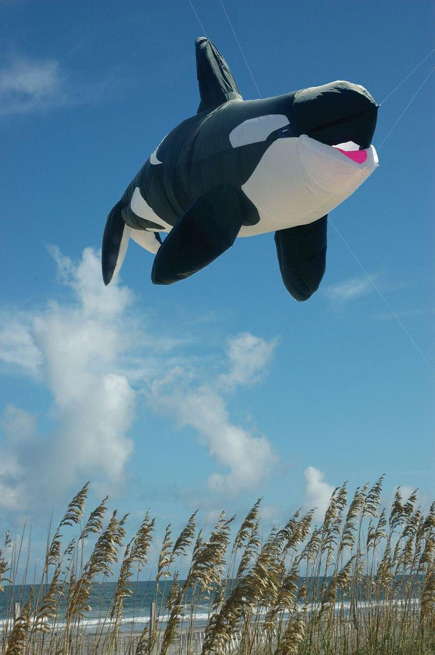 Killer Whale 8 Foot Kite Line Laundry