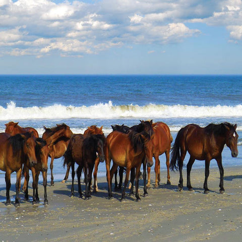 Beach Party Horses Puzzle