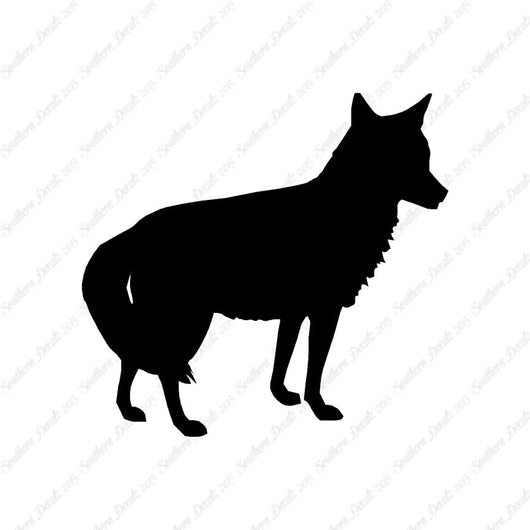 Coyote Jackal Wild Dog