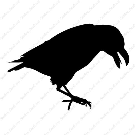 Raven Blackbird Crow