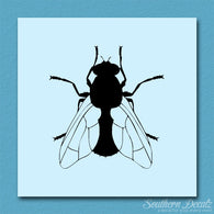 House Fly Insect Pest