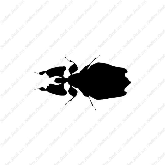 Dung Beetle Insect