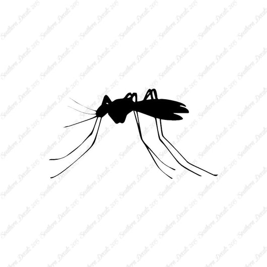 Mosquito Insect