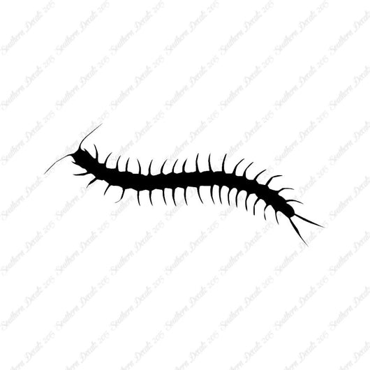 Centipede Millipede Insect