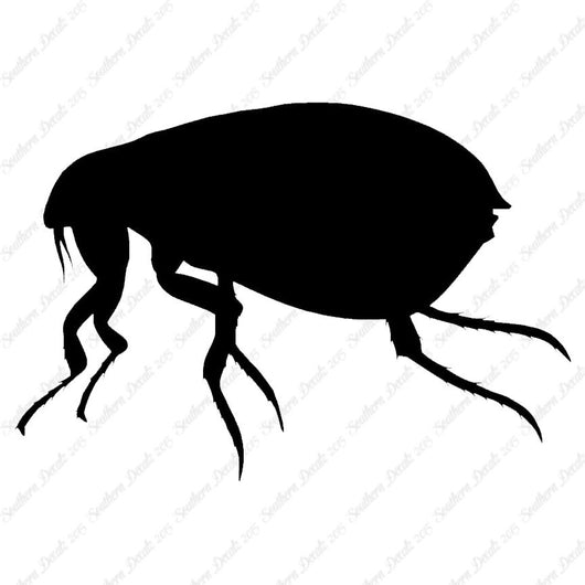 Tick Flea Insect