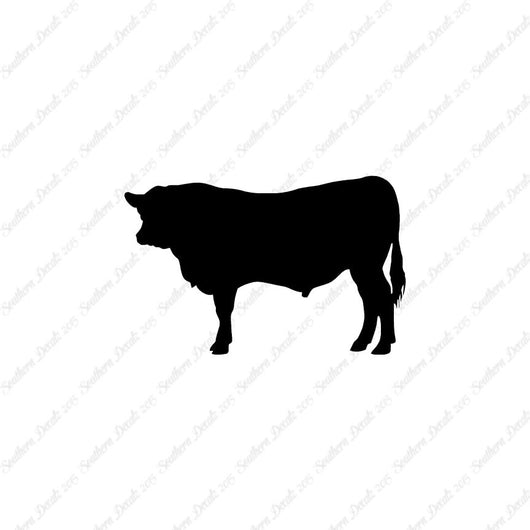 Angus Cow Cattle