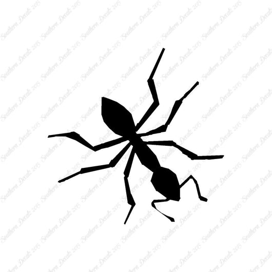 Insect Ant Pest