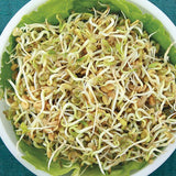 Organic Fenugreek Sprouting Seeds
