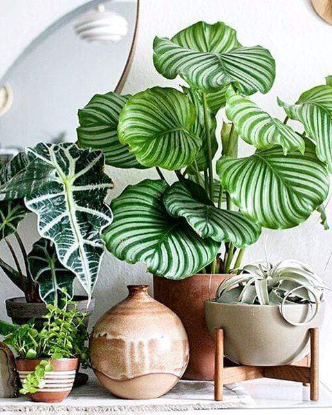 URBAN JUNGLE: The Indoor Plant Trend that has Designers Going Wild
