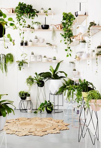 indoor plants greenery pantone colour trend 2017 pantone