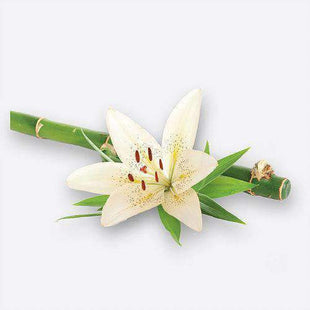 Candles & Candle Holders Large Candle Refill (Bamboo & White Lily)