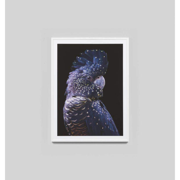 Black Cockatoo Photographic Print By Paul Looyen--VAVOOM
