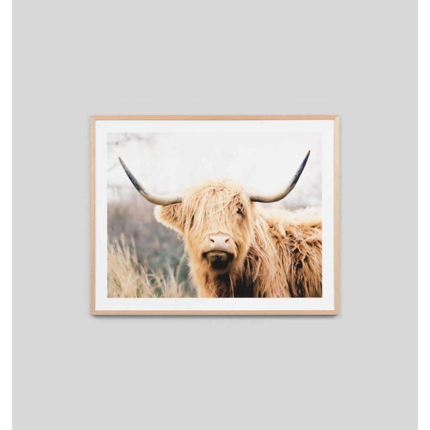 Posters, Prints, & Visual Artwork Highland Bovine Photographic Print